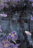 Violet L 1995